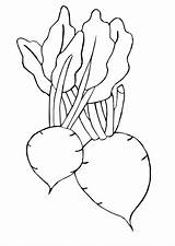 Coloring Pages Beet sketch template