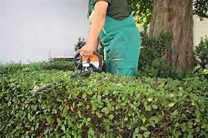 Wann Dürfen Hecken Geschnitten Werden : hecken richtig schneiden so wird es gemacht ~ Frokenaadalensverden.com Haus und Dekorationen