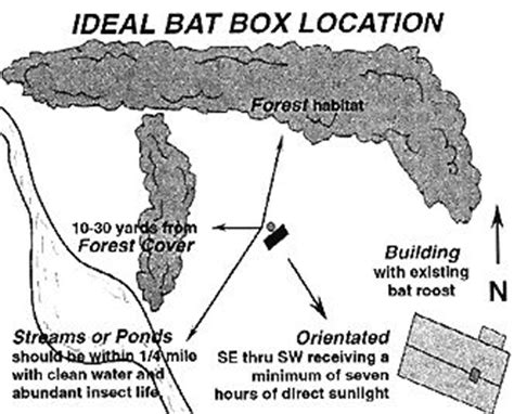 ideal bat box location the garden pinterest