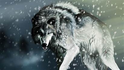 Wolf Desktop Wallpapers Grey Wolves Backgrounds Gray