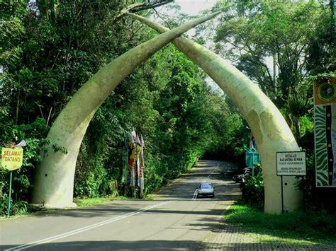 taman safari bogor tempat wisata foto gambar wallpaper