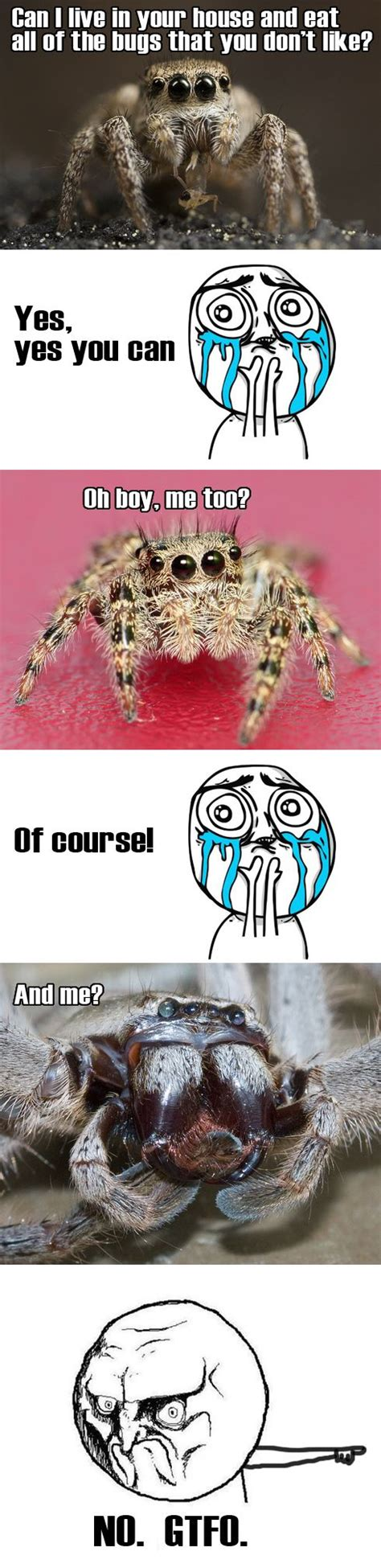 Cute Spider Meme - 52 best images about spiders on pinterest game of ants and jumping spider