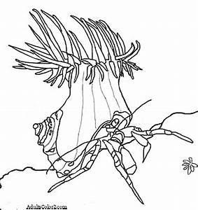Hermit Crab Without Shell Coloring Page