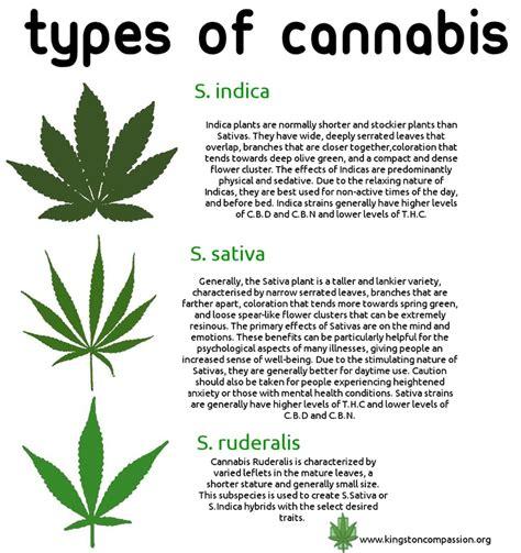 Marijuana Use May Damage Sperm Quality  Welcome To