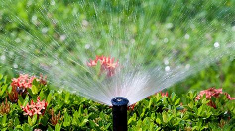homelife 8 top water saving tips for your garden