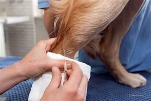 Hund Würmer Hausmittel : w rmer beim hund diagnose behandlung prognose tiermedizinportal ~ Frokenaadalensverden.com Haus und Dekorationen