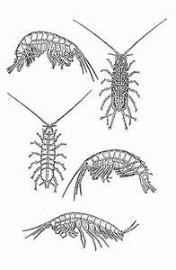 Kleine Schwarze Würmer : makroorg ~ Lizthompson.info Haus und Dekorationen
