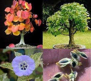 Pflanzen Für Drinnen : duftpflanzen sortiment set bl hende duftende pflanzen f r die wohnung drinnen florashop2000 ~ Frokenaadalensverden.com Haus und Dekorationen