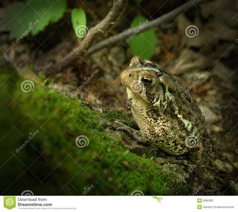 Toad On Log