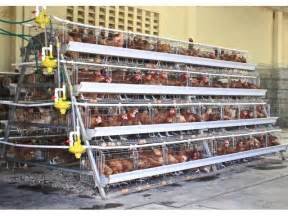Layer Cages Poultry Chickens