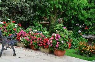 plants around patio 35 patio potted plant and flower ideas creative and lovely photos