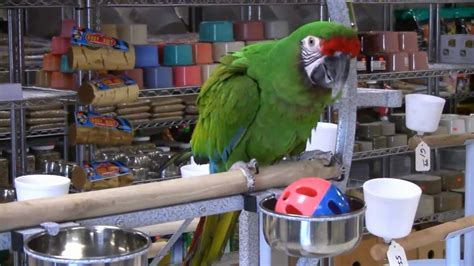 arizona bird store parrots exotic birds cages for
