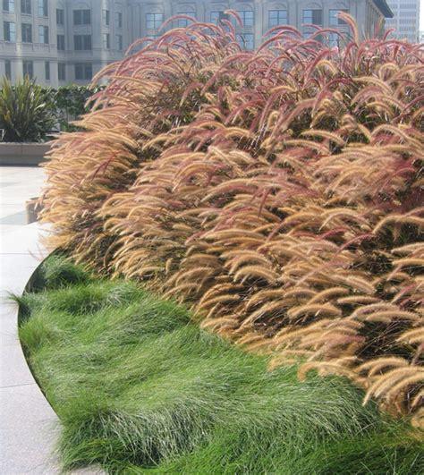 mass planting 10 california landsape ideas for contemporary gardens landscaperesource com