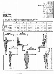 Body Dimensions 1