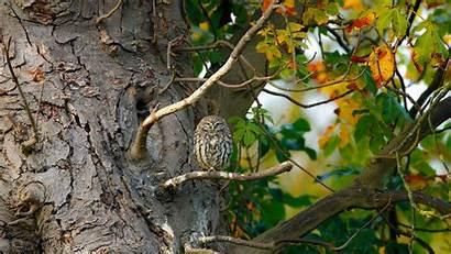 Birds Trees Sitting Animals Leaves Owl Nature