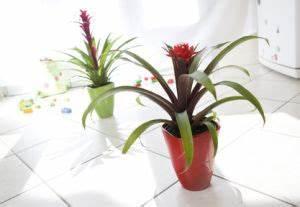Plante Tropicale D Intérieur : plante verte avec fleur rouge au milieu plante grasse retombante fleurs rouges maison retraite ~ Melissatoandfro.com Idées de Décoration