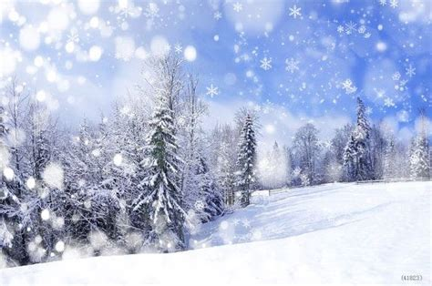 Digital Photography Christmas Backdrops Frozen Snow Forest