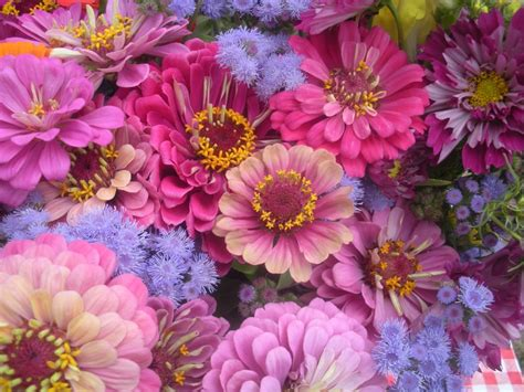 pink or purple flowers pink and purple flowers by justmeandacamera on deviantart