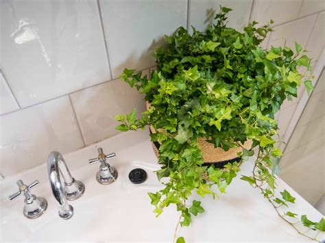 Plants For Bathrooms With No Light by The Plants That Will Actually Thrive Not Die In Your