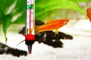 Optimale Aquarium Temperatur : best aquarium thermometer review aquarist club ~ Yasmunasinghe.com Haus und Dekorationen
