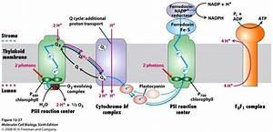 120 Best Images About Molecularbio  U0026 Biochemistry Memory