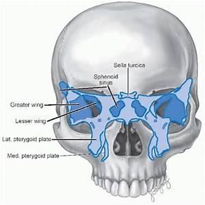 Cancer Of The Nasal Vestibule  Nasal Cavity  Paranasal