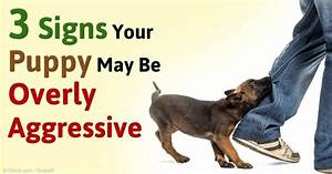 to prevent aggressive behavior in your puppy it is With aggressive dog training tips