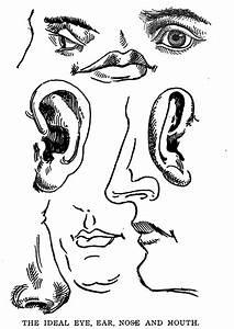 Drawing The Human Body  U0026 Figure By Memorizing Human