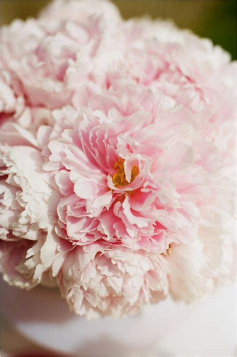 summer peony wedding inspiration onewed