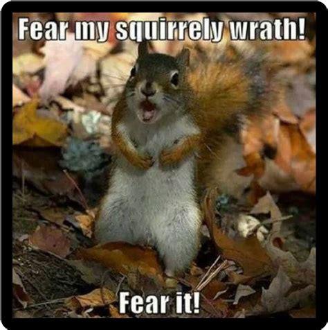 funny squirrel humor fear  squirrely wrath refrigerator