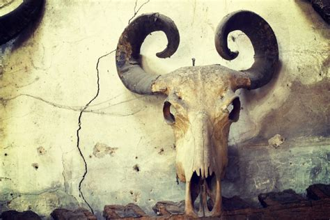 buffalo skull   wall custom wallpaper