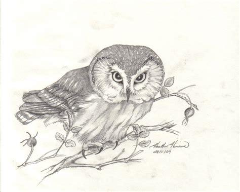 Owl Drawing Pencil Sketch