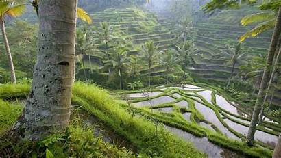 Bali Indonesia Wallpapers Rice Nature Backgrounds Landscapes