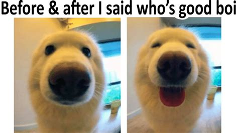 Best Wholesome Memes For A Bad Day V4