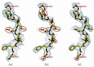 Partial Electron Density Maps Of Tom70p At 1  U03c3 Covering