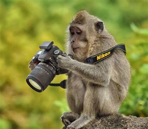 Funny Animal Photography