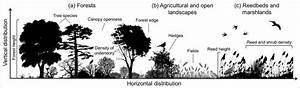 The Vertical And Horizontal Distribution Of Plants
