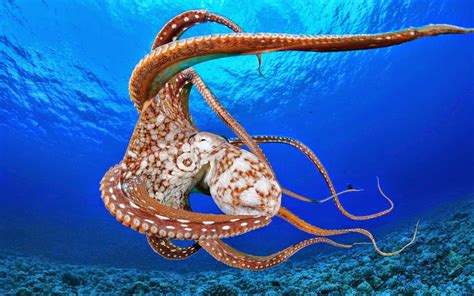 The Cross Wallpaper Desktop Octopus Hd Wallpapers Earth Blog