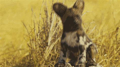 Spy In The Wild Cute Animals Gif By Thirteenwnet Find