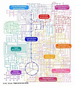 Biochemical Pathway Of Cell Respiration Flow Chart Awesome