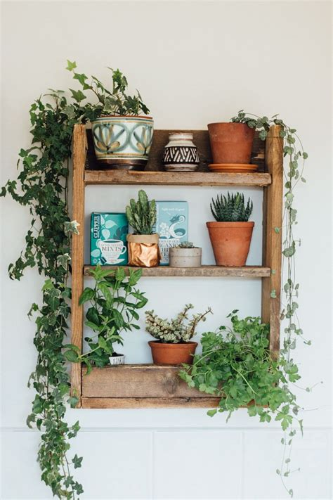 Ideas For Kitchen Plant Shelves by Wooden Shelf With Potted House Plants And Cacti Bedroom