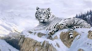 La belleza de los tigres blancos - YouTube