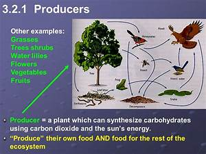 Unit 3: Ecosystems Chapter 6 – Part 1 Pg - ppt video ...
