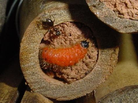 Kleine Rote Ameisen Im Garten 4271 by Insektenhotel Seite 3