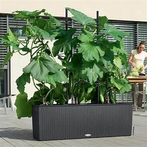 Jardinière Haute Pas Cher : jardini re lechuza trio cottage l130 h44 cm granit ~ Premium-room.com Idées de Décoration