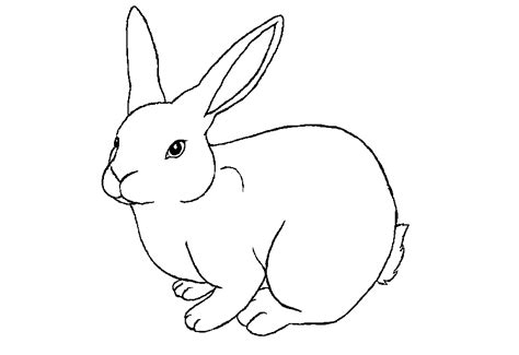 colours drawing wallpaper beautiful rabbit coloring