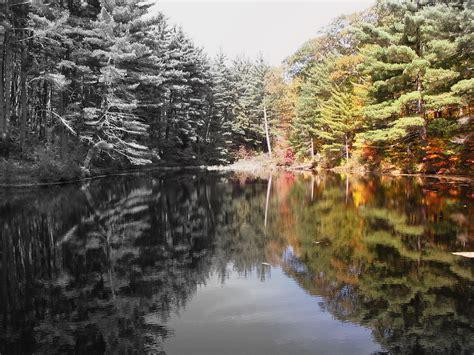 color image b w vs color photo image landscape forest nature
