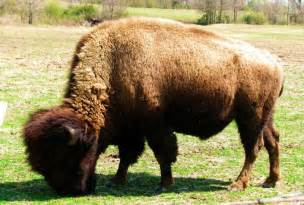 Real Animal Hybrids