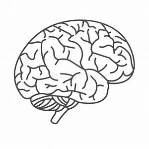 33 Brain Diagram Black And White