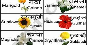 Designs For Names In Hindi Hindi Flowers Chart Learn Hindi Pinterest Flower